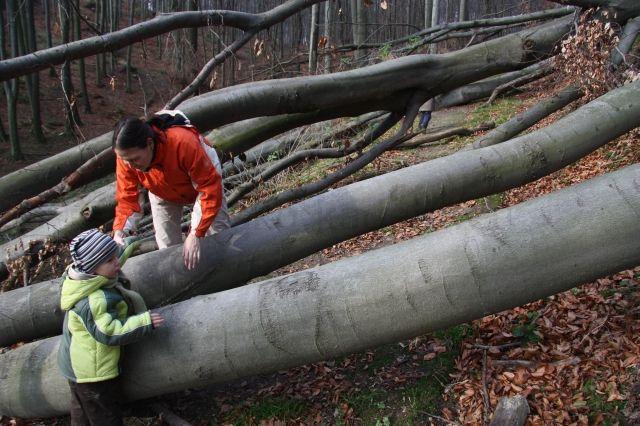 Prekážkova dráha - popadané stromy uprostred lesnej cestičky