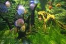 Farebné  rybky - hrali všetkými farbami a farebnými kombináciami