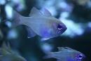 Jasné rybie očká :)