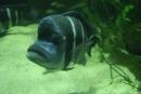 Namosúrená ryba - samé foťáky