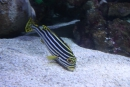 opäť originálne sfarbená rybka
