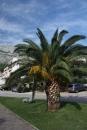 Palma s pohorím Biokovo