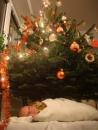 Vianočný darček - doniesli si ma domov, rovno pod stromček