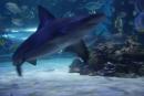 Žralok v plnej kráse